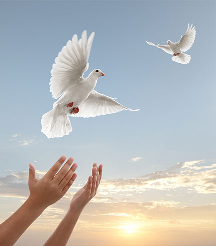Realease of doves